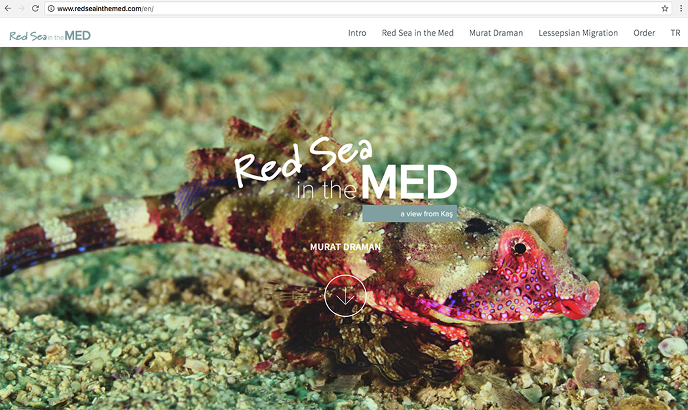 Red Sea in the MED Website Design